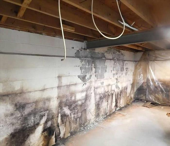 Basement Mold in Carrollton