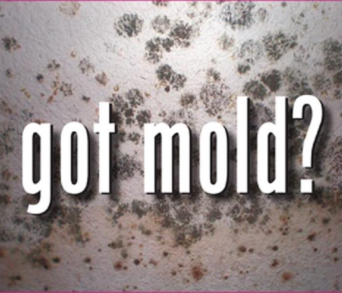 Mold Remediation Does Your Carrollton Home Have a Mold Problem